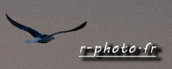 rphoto